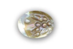 Conchiglia con bolle perlacee